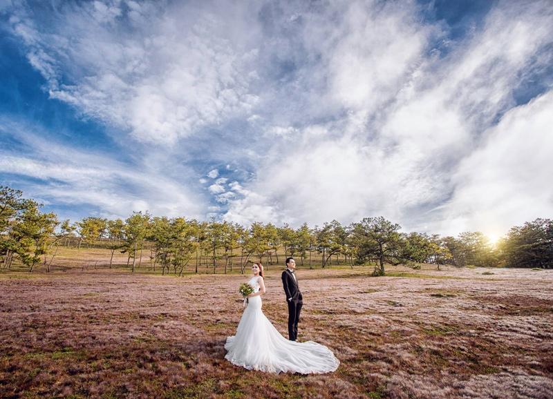 Đồi cỏ hồng Đà lạt chụp ảnh cưới